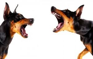 Hundegøen